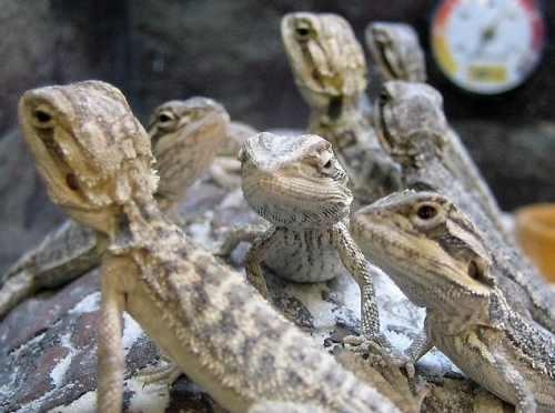 Lizard Squad