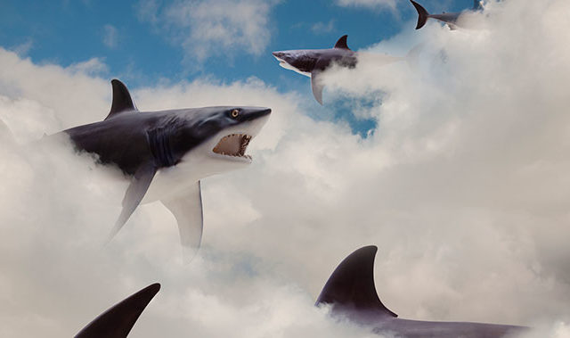 sharks in clouds cyber risk insurance