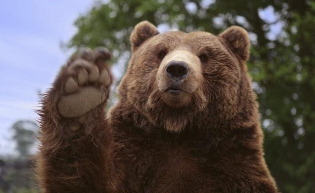 fancy-bear